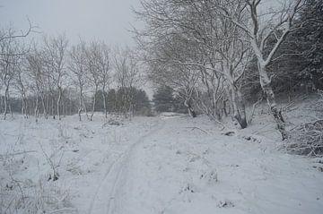 Schnee in den Dünen von Inge Schoonenberg