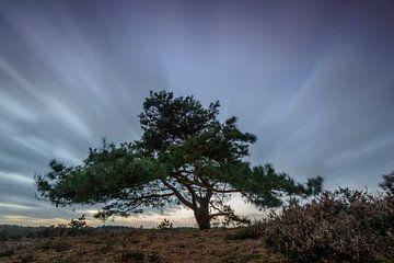 Dennenboom in de wind von Sjoerd van der Wal
