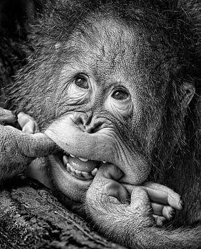 Big Smile ..... bitte, Angela Muliani Hartojo von 1x