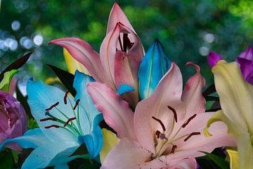 Rainbow lelies in de kleur roze,geel,blauw en paars van JM de Jong-Jansen