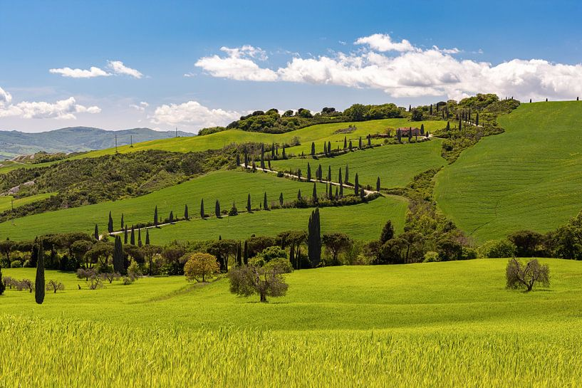Frühling in der Toskana von Michael Valjak