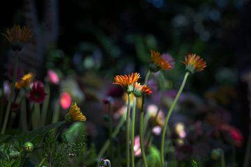 Wilde Blomen van Petro Luft