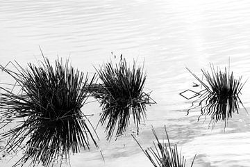 Biezen in de Biesbosch in zwart-wit von Irene Damminga