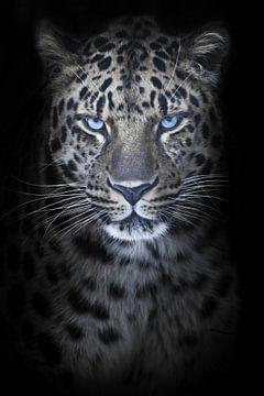 Leopard in der Nacht Mondlicht, blaue Augen leuchten, verfärbte Fell schwarzen Hintergrund, volles G von Michael Semenov
