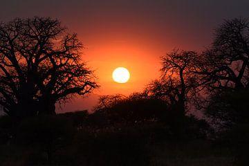 Op safari in Afrika: Zonsondergang in Tarangire Nationaal Park, Tanzania van Koolspix