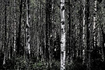 Dunkler Wald von Maurice Dawson