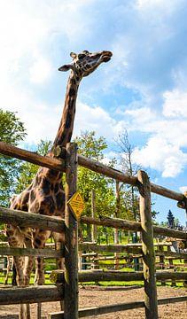 Giraffe / Girafe van melissa demeunier