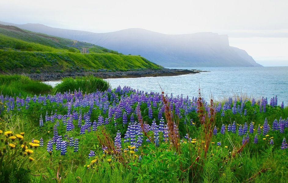 Zicht op de baai met lupine op de voorgrond, IJsland