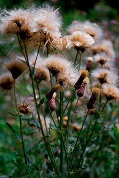 Wilde bloemen in kleur van Summer van Beek