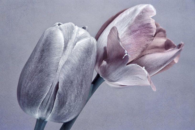 Tulpen van INA FineArt