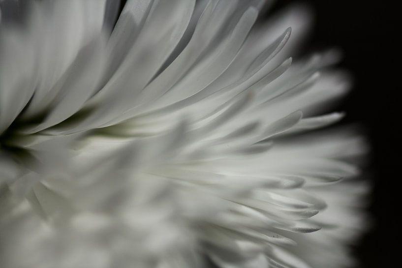 Dark side of the flower van Ramon Bovenlander