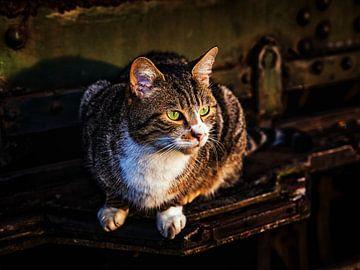 Katze von Rob Boon