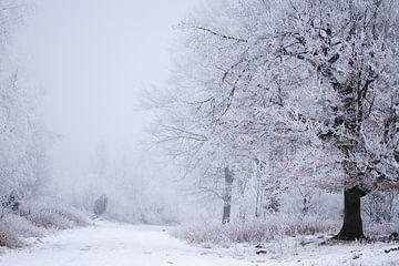 Waldweg im Winter von Karijn Seldam