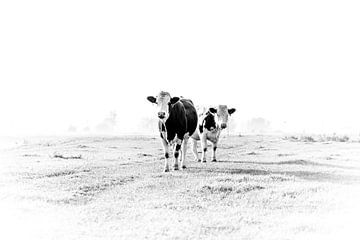 Kühe auf dem Land von Sandra Koppenhöfer
