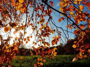 Sonnenstrahlen durch einen Ast mit bunten Herbstblättern von Joke te Grotenhuis