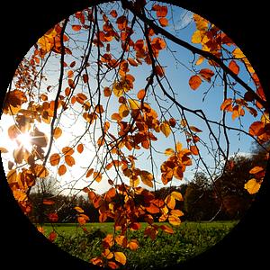 zonnige herfstkleuren van Joke te Grotenhuis