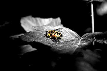 Eine Fliege in der Sonne von Tobias Van der ploeg