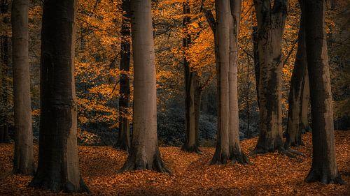 Autumn Mood van