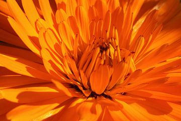Ringelblume von Markus Wegner