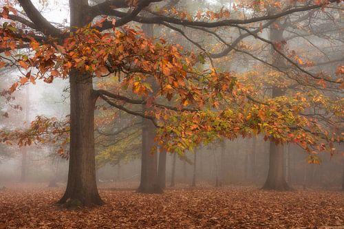 herfst mist van