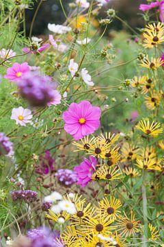 Bloemen in de volkstuin van Anneke Beemer