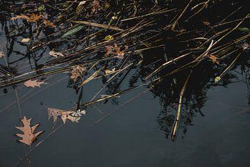 Weerspiegeling in de Neerbeek van ElkeS Fotografie