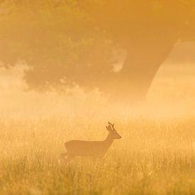 Roe deer in the morning von Karla Leeftink