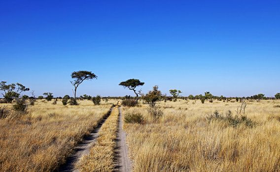 landscape in Central Kalahari Game Reserve, Botsuana van W. Woyke