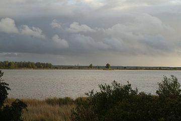 Oostvaardersplassen (Almere op achtergrond) van Sander Miedema