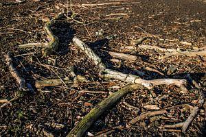 Afgebroken dode wilgentakken op een kale ondergrond