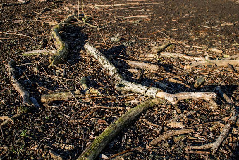 Afgebroken dode wilgentakken op een kale ondergrond van TwentePics
