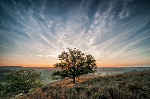 De boom van