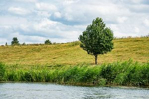 Landscape with trees on the river Peene