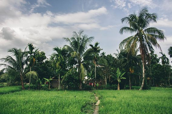 Sumatra van Lars Korzelius