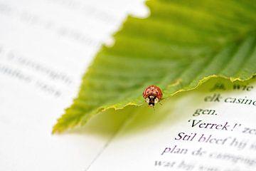 Lieveheersbeestje op een boek van Evy De Wit