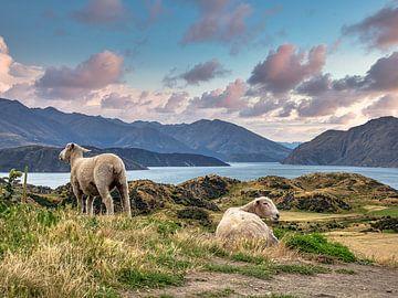 Schafe zählen auf dem Berg in Neuseeland von Rik Pijnenburg