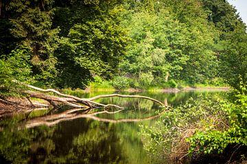 natuur spiegeling van Geert-Jan Timmermans