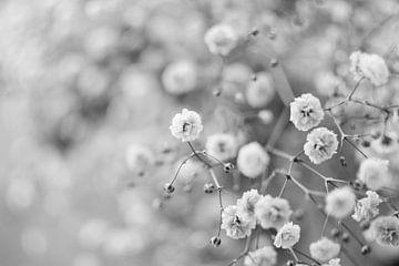 Frühling von Andrea Fuchs
