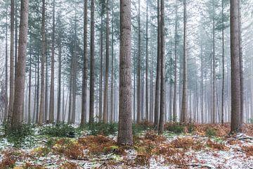 Winters bos van