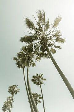 Vintage palmbomen in de zon van Melanie Viola