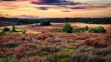 Paarse hei in de zonsondergang van Sran Vld Fotografie