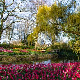 Tulpen in de Poldertuin in Anna Paulowna van Margreet Frowijn