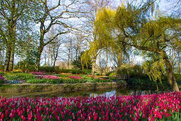 Tulpen in de Poldertuin in Anna Paulowna