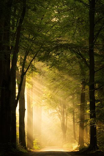 Beautiful Light van Martin Podt