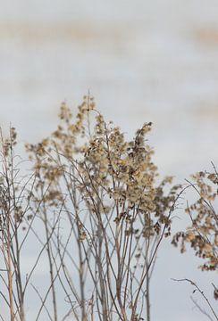 Feldblumen im Schnee von Anke Winters