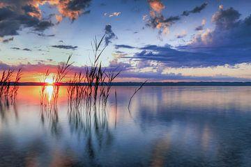 LP 71337607 Riet bij zonsopgang op het meer van Starnberg van BeeldigBeeld Food & Lifestyle