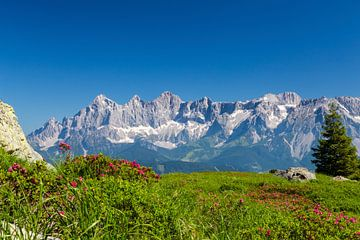 """Mountain Landscape """"Mountains in bloom"""" sur Coen Weesjes"""
