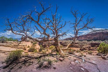 Shafer-Canyonlands von Harold van den Hurk