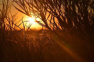 Detail eines Busches während des Sonnenuntergangs von Els Royackers