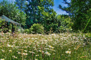 Garten - Margaritenwiese von Maximilian Prinz Hohenlohe